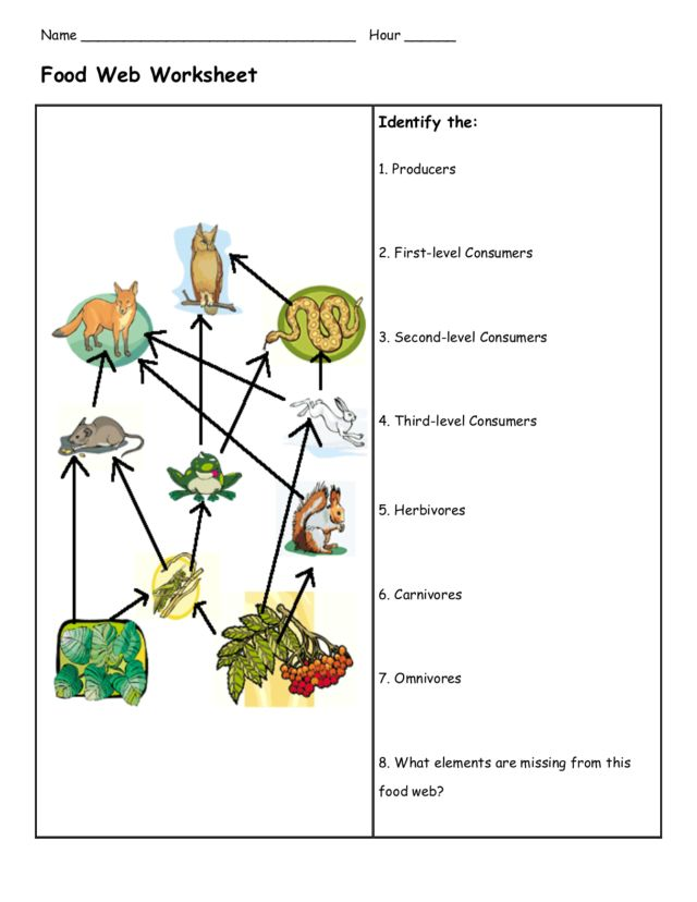 Deciduous Forest Food Chains Lesson Plans Worksheets – Food Chains and Food Webs Worksheet