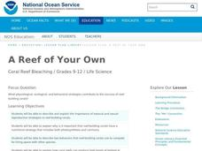 A Reef of Your Own Lesson Plan