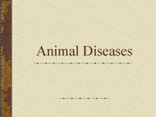 Animal Diseases Presentation
