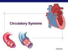 Circulatory Systems Presentation