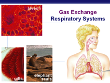 Gas exchange: Respiratory Systems Presentation