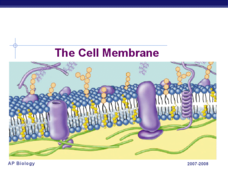 The Cell Membrane Presentation