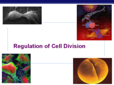 Regulation of Cell Division Presentation