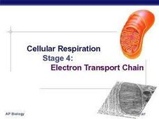 Cellular Respiration: Electron Transport chain Presentation