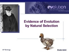 Evidence of Evolution by Natural Selection Presentation