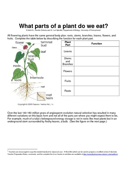 What Parts Of A Plant Do We Eat Worksheet For 8th 12th