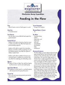 Feeding in the Flow Lesson Plan