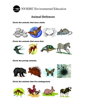 Animal Defenses Lesson Plans Worksheets Reviewed By Teachers
