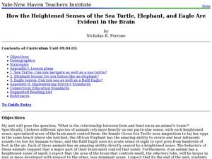 How the Heightened Senses of the Sea Turtle, Elephant, and Eagle Are Evident in the Brain Lesson Plan