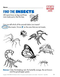 Find The Insects Lesson Plan