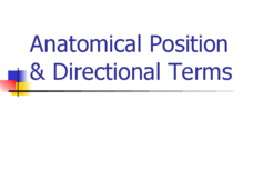 Anatomical Position & Directional Terms Presentation