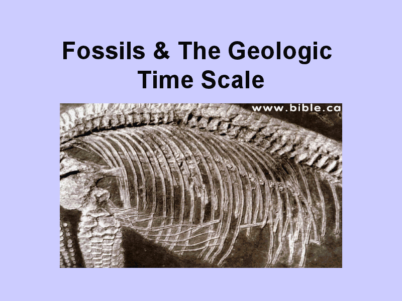 Fossils & The Geologic Time Scale Presentation