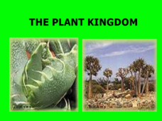 The Plant Kingdom Presentation