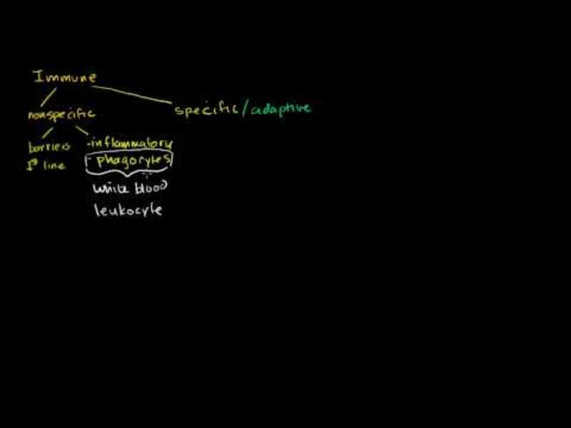 Types of Immune Responses: Innate and Adaptive. Humoral vs. Cell-Mediated Video