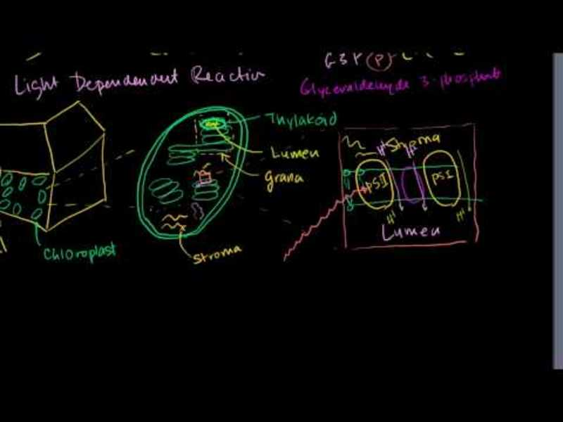Photosynthesis: Light Reactions 1 Video