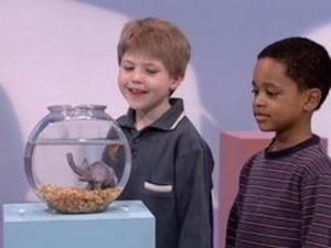 Elmo S World Kids Talk Animal Video For Pre K