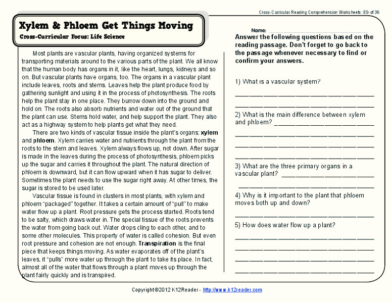 Xylem And Phloem Worksheet For 4th 5th Grade Lesson Planet