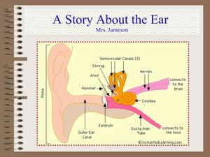 A Story About the Ear Presentation