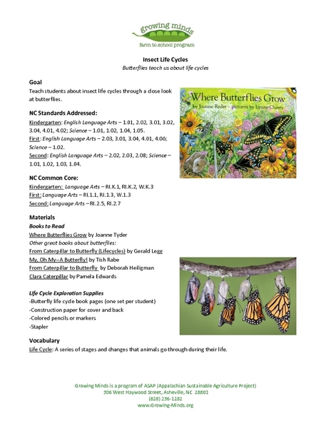 Insect Life Cycles Lesson Plan