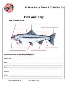 label parts of a fish lesson plans worksheets reviewed. Black Bedroom Furniture Sets. Home Design Ideas