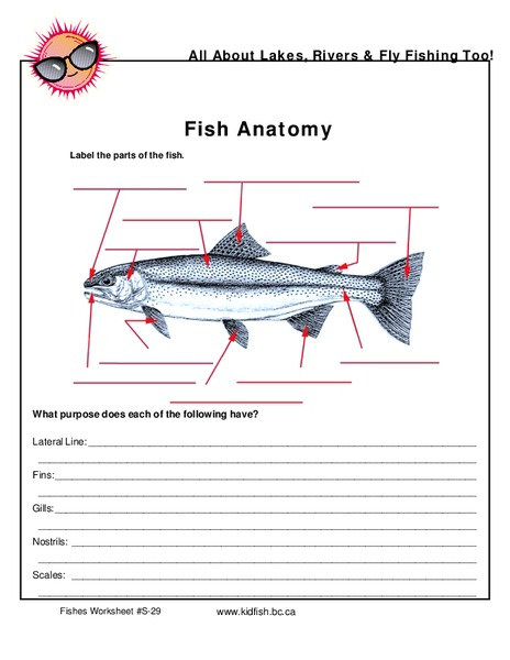Fish Anatomy Diagram Koi Anatomy Diagram External