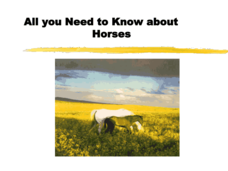 All You Need to Know about Horses Presentation