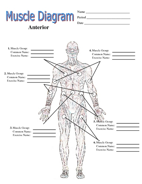 muscle diagram 6th - 12th grade worksheet | lesson planet, Muscles