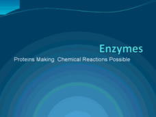 Enzymes - Proteins Making Chemical Reactions Possible Presentation