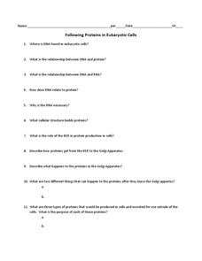 Following Proteins in Eukaryotic Cells Worksheet