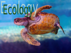 Ecology, Nutrient Cycles, Populations Presentation