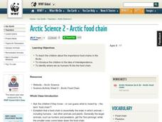 Arctic Food Chain Lesson Plan