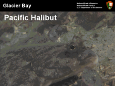 Glacier Bay Pacific Halibut Presentation