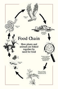 Food Chain Activities & Project