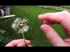 STEMbite: Seed Dispersal Video