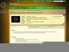 What Are You Up To? Lesson Plan