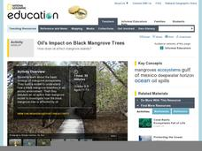 Oil's Impact on Black Mangrove Trees Activities & Project