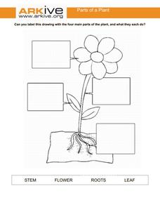 Parts of the Plant Graphic Organizer