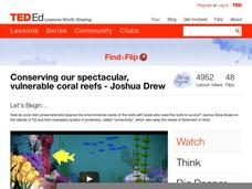 Conserving our Spectacular, Vulnerable Coral Reefs Video