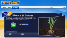 Study Jams! Roots and Stems Interactive