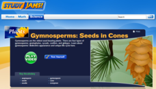 Study Jams! Gymnosperms: Seeds in Cones Interactive