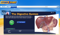 Study Jams! The Digestive System Interactive
