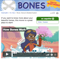 How the Body Works: Bones Video
