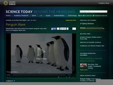 Penguin Wave Video