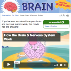 How the Body Works: The Brain Video