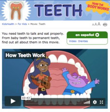 How the Body Works—Teeth Video
