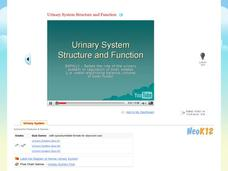 Urinary System Structure and Function Video