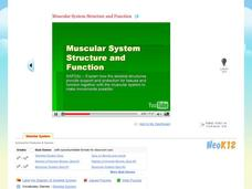 Muscular System Structure and Function Video