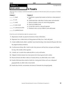 Fossils Worksheet