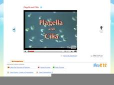Flagella & Cilia Video