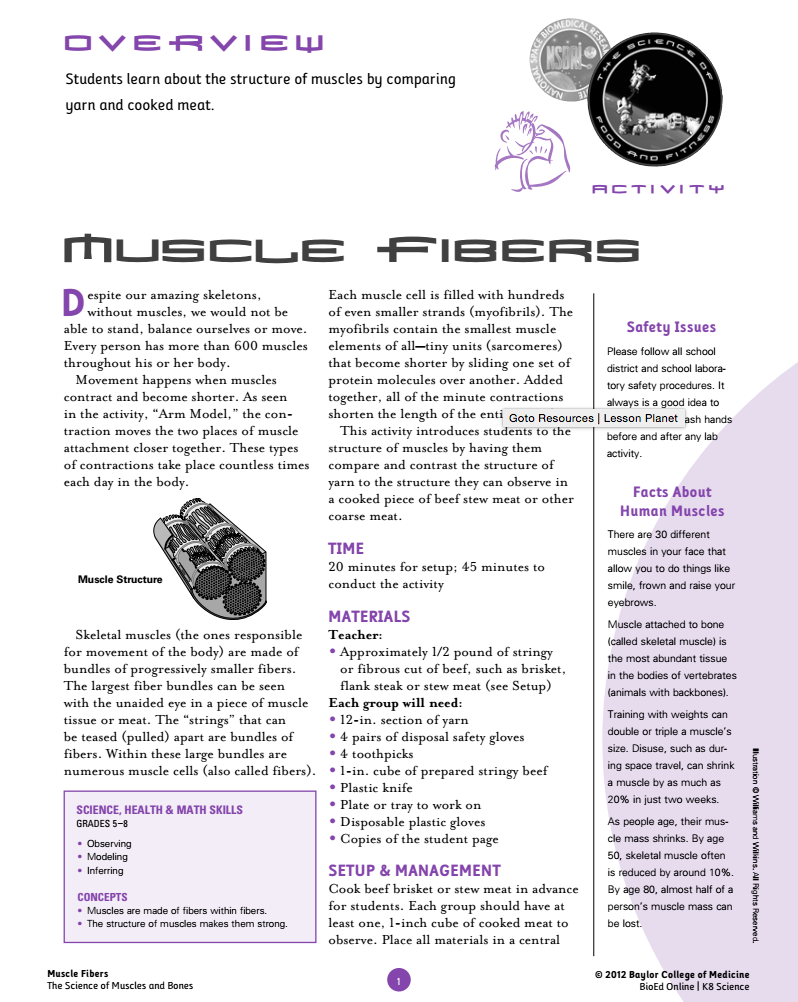 Muscle Fibers Lesson Plan